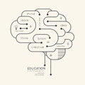 Flat linear infographic education outline brain concept vector illustration Royalty Free Stock Images