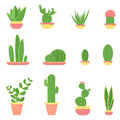 Flat vector illustration of cacti and succulents in pots.