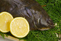 Flatfish Royalty Free Stock Images