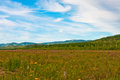 Flavor meadow in khabarovskiy kray bogorodskoe village far east russia Stock Images
