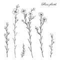 Flax plant, wild field flower isolated on white, botanical hand drawn sketch vector doodle illustration, line art for