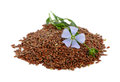 Flax seeds and flowers on white background Royalty Free Stock Photo