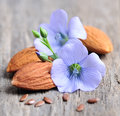 Flaxseed flowers  and almonds Royalty Free Stock Photo