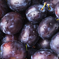 Fleshy plums wet close up as a background Stock Photo