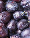Fleshy plums wet close up as a background Royalty Free Stock Photo