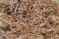 Fleshy roots Royalty Free Stock Photo