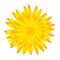 Fleur de Dandelion.Spring Photos libres de droits