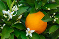 Fleur orange et orange Images libres de droits