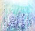 Fleurs de pré illuminées par lumière du soleil Photos libres de droits