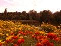 Fleurs en carol park Photo libre de droits