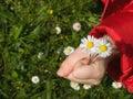 Fleurs pour vous Photo libre de droits