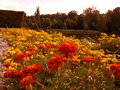 Fleurs rouges et jaunes Photo libre de droits