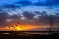 Flight of Birds at Dawn Royalty Free Stock Photo
