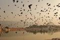 Flight of birds Royalty Free Stock Photo
