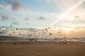 Flight of gulls Royalty Free Stock Photo
