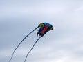 stock image of  Flight of a kite