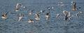 Flight of seagulls by a sunny morning in geneva Stock Photos