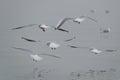 Flight of seagulls by a sunny morning in geneva Stock Photo
