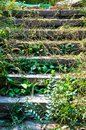 Deserted steps or Stairs with grass Royalty Free Stock Photo