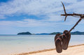 Flip flop on the beach hanging dead tree over Stock Images