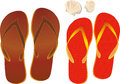 Flipflops und shell Stockfoto