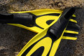 The flipper yellow and black colored over sands Stock Photography