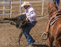 Flipping him over red bluff california april a calf roping cowboy flips his captured calf onto the ground to tie up at this rodeo Royalty Free Stock Photography