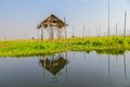 Floating eaves inle lake in the village myanmar Royalty Free Stock Photography
