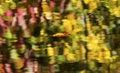 Floating Leaf Abstract Reflection Wenatchee River Washington Royalty Free Stock Photo