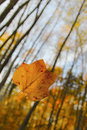 Floating Leaf Royalty Free Stock Photo