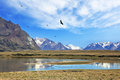 The flock of Andean condors flying on the lake Royalty Free Stock Photo