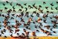 Flock of birds Royalty Free Stock Photo