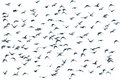 Flock of birds, isolated Royalty Free Stock Photo