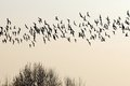 Flock of birds migrating south. Royalty Free Stock Photo