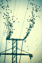 Flock of birds on power lines in vintage light Stock Photography