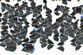 A flock of birds resting together Royalty Free Stock Photo