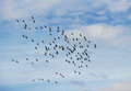Flock of birds in a sky Stock Photography