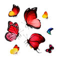 Flock of butterflies on white Stock Image