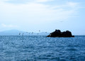 Flock of cormorants taking off from  small island. Royalty Free Stock Photo