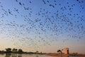 Flock of demoiselle crains flying in blue sky khichan village rajasthan india Stock Photo