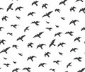 A flock of flying birds gray silhouette. Dove, seagull sketch