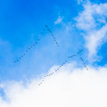 Flock Of Geese Royalty Free Stock Photo