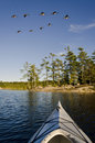 Flock geese flyings over rocky island person kayak looks Royalty Free Stock Photography