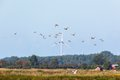 Flock of mallard ducks with wind power in the horizon Stock Images