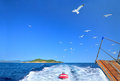 Flock of seagulls trailing the tourist boat skiathos greece wide angle view on a in summer afternoon between and skopelos island Royalty Free Stock Photo