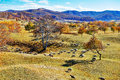 Flock of sheep or goats and autumn trees Royalty Free Stock Photo
