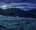 Flock of sheep on the meadow near forest in mountains at night Royalty Free Stock Photo