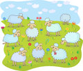 Flock of sheep a in the pasture Royalty Free Stock Photos