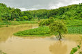 Flood in bangladesh river flooding green fields Stock Images