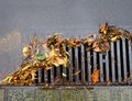 Flood of leaves drain being clogged by as rainwater floods in Royalty Free Stock Photos